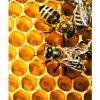 ảnh sáp ong